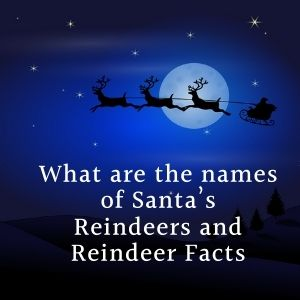 What Are The Names Of Santa's Reindeers And Reindeer Facts
